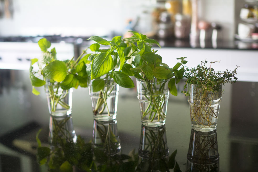 homegrown thyme, japanese mint, lemon balm and sweet basil in glasses on a kitchen top