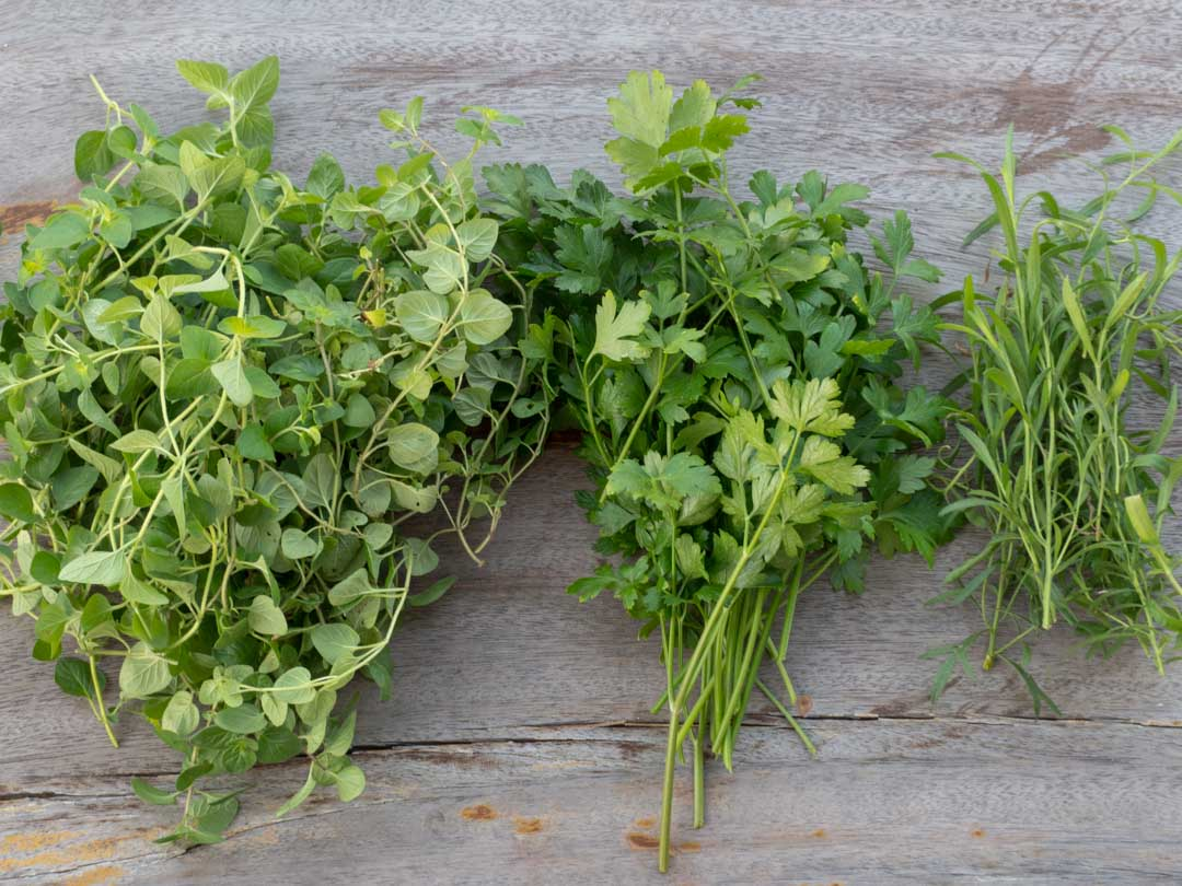 homegrown oregano, parsley, tarragon